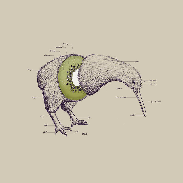 Kiwi Anatomy by William McDonald