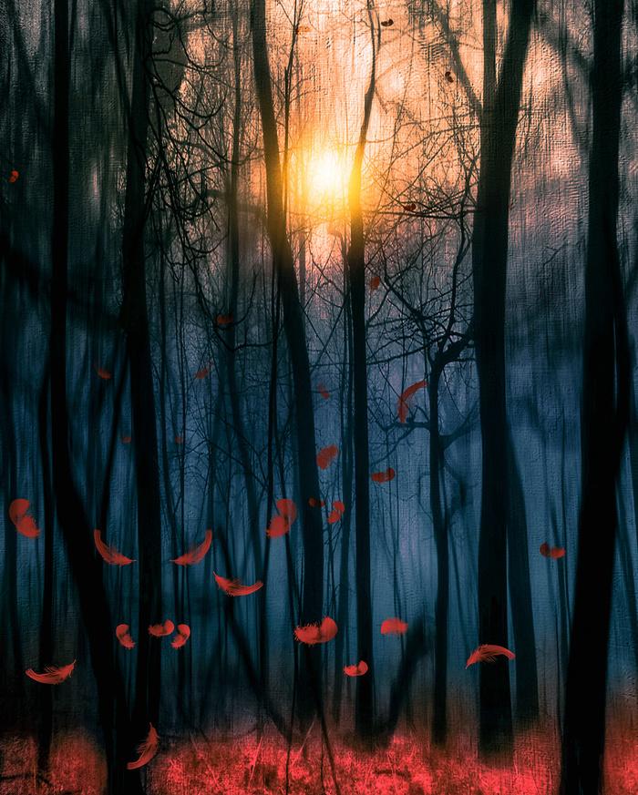 Red feather dance by Viviana Gonzalez