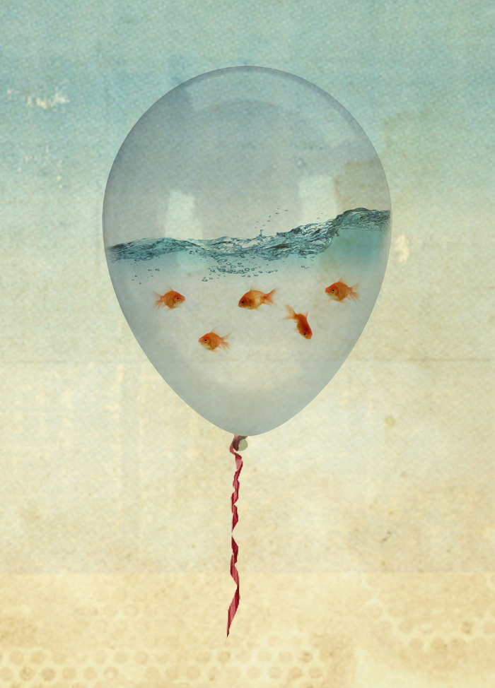 balloon fish by Vin Zzep