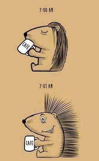 Erizo a las 7:00 AM tomando café - Erizo a las 7:01 AM activo
