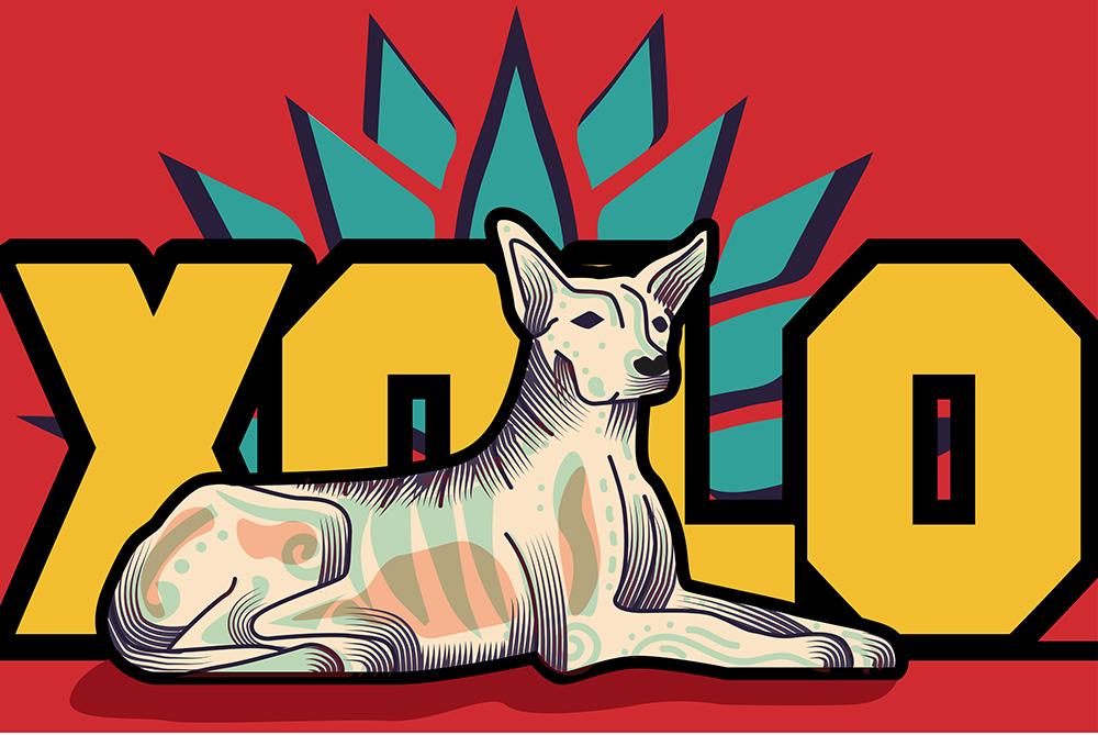 XOLO NFT - OpenSea